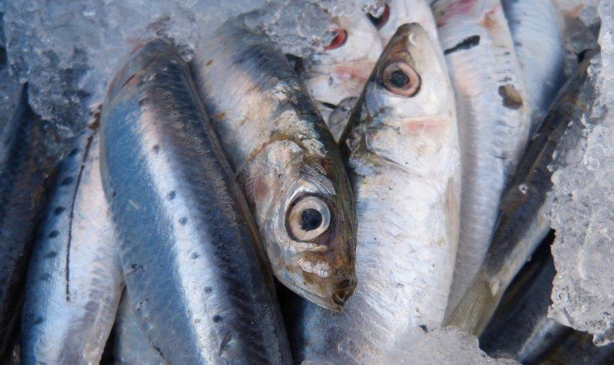 Tenir nivells més alts d'omega-3 en sang incrementa l'esperança de vida en gairebé cinc anys