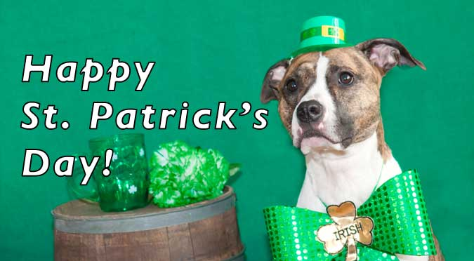 happy st patricks day from castillo law