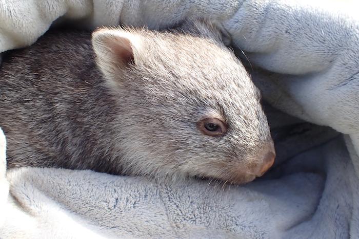 wildlife on flinders island