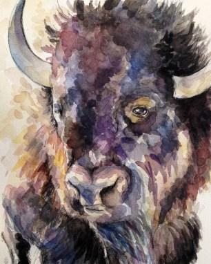 bison-head-web