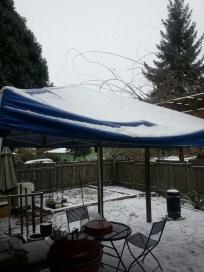 A light powdery snow covering the backyard
