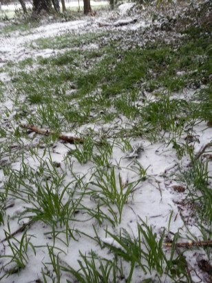 The wild onions are already growing! And the snow didn't seem to affect them at all.