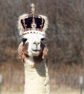 Sir Lance-O-Llama