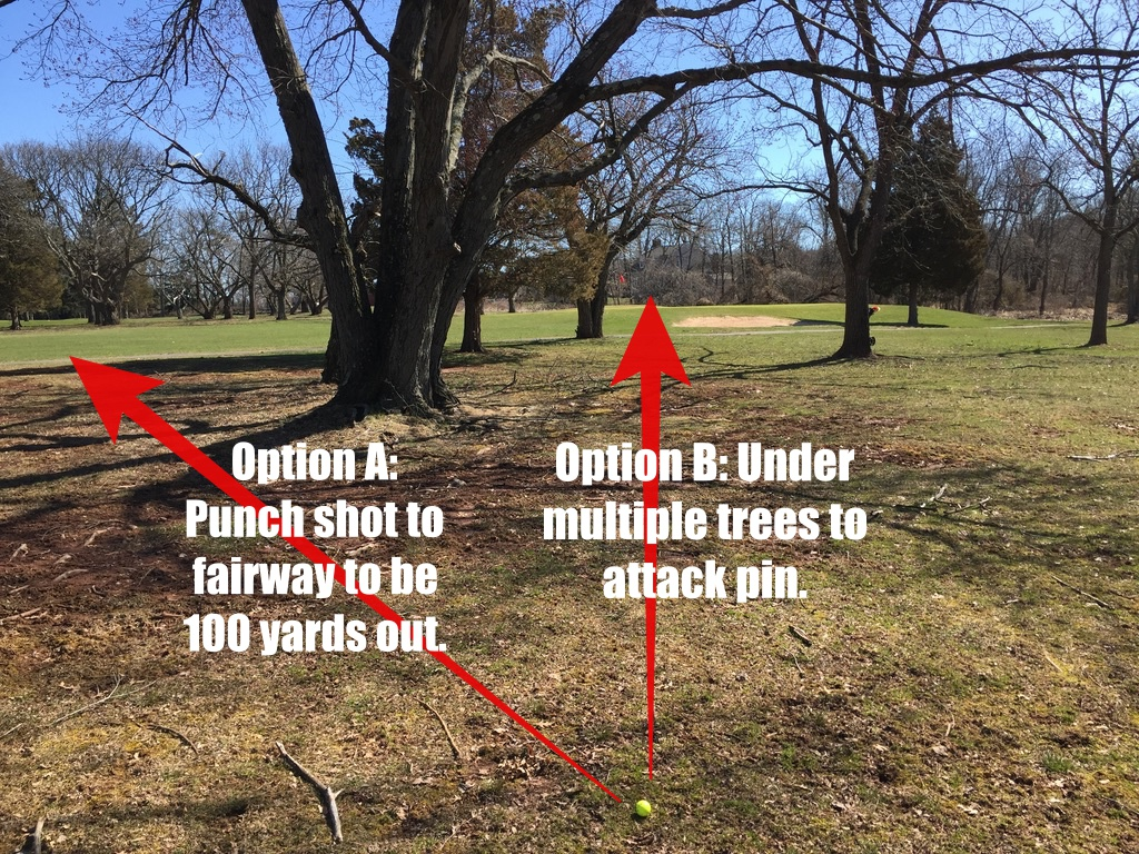 Tree Shot Options A & B