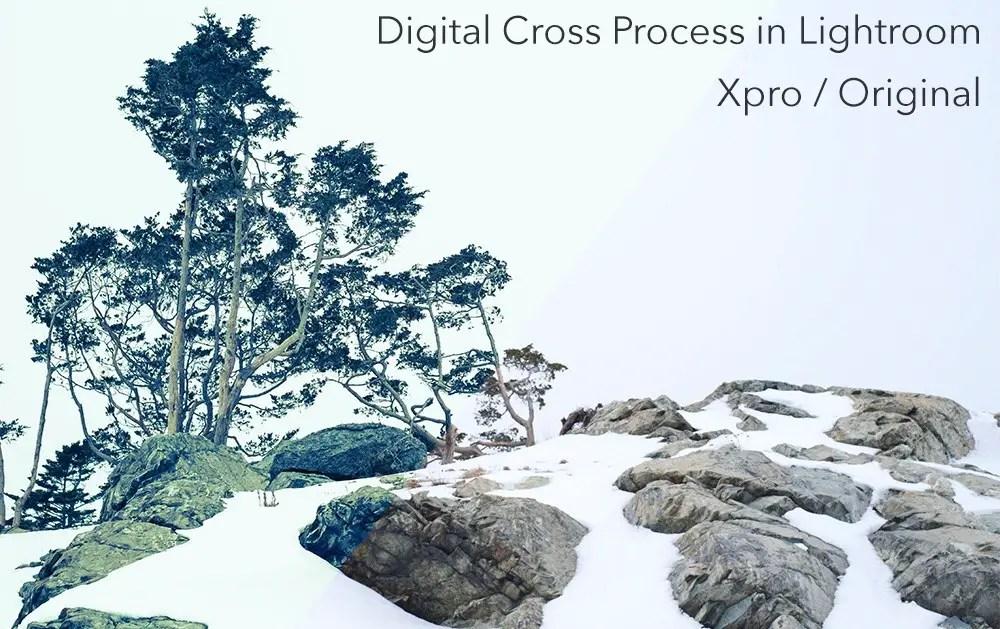 Cross Process Film 5