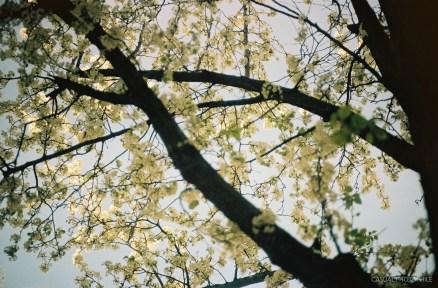 Leica MA sample Shots-7