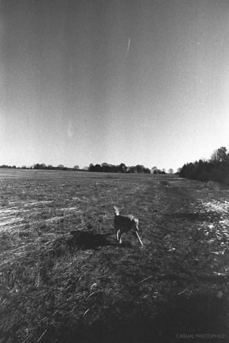 Kodak Plus X film sample (2 of 12)