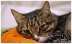 кошка-чихнула