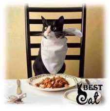 кот-ест-фото