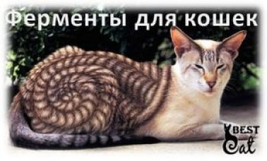 ферменты-для-кошки-фото