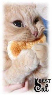 корм-коту-фото