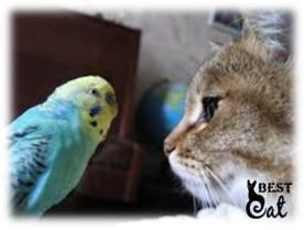 кот-птица