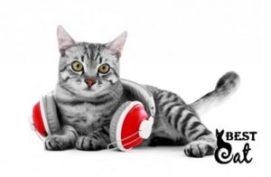 музыка-для-кошки-фото