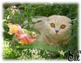 кошка-в-траве-фото