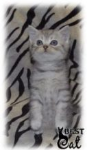 котенок-амилоидоз-фото