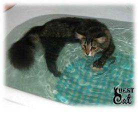 кот-в-ванной