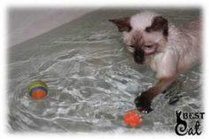 котенок-играет-в-ванной