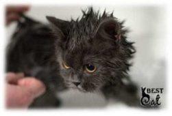 кот-мокрый