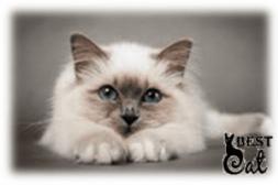 кошка-фото