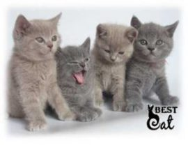 фото-котят