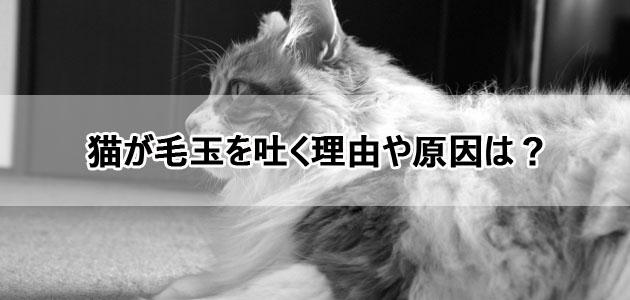 猫が毛玉を吐く理由や原因