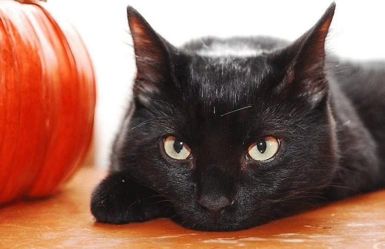 Weshalb Katzen an Halloween besser nicht nach draußen sollten Cat