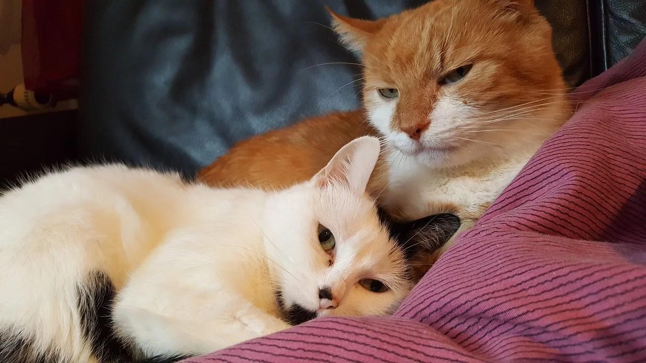 Katzen Aneinander Gewöhnen So Gelingt Die