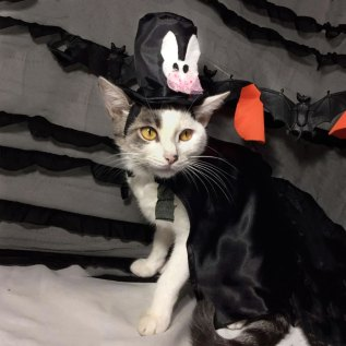 disfraz halloween ropa para gatos en lima peru miraflores surco