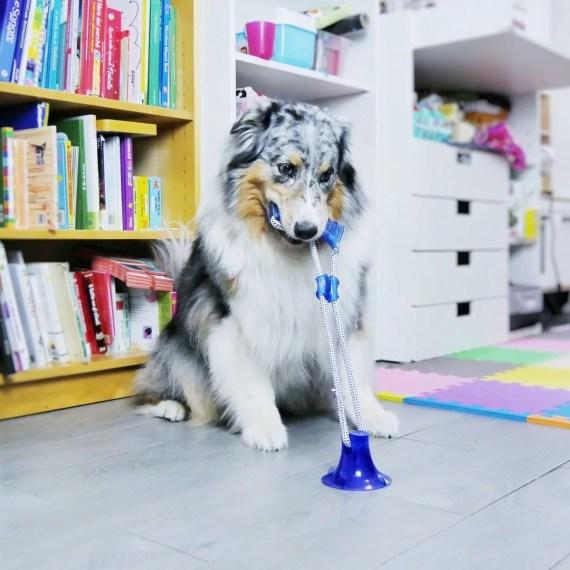 juguete para perros para jalar en miraflores lima peru C6098709 croci