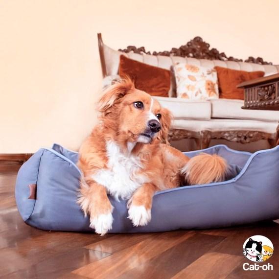 Cama para perros impermeable en miraflores lima peru pet shop