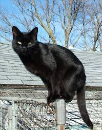 Black cat sitting on a fence