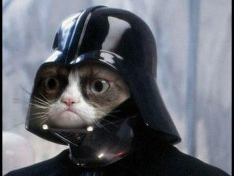 Darth Vadar cat