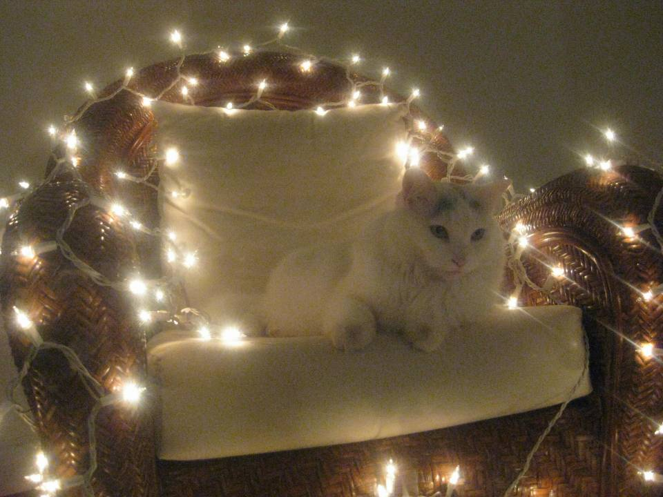Cat with Christmas lights