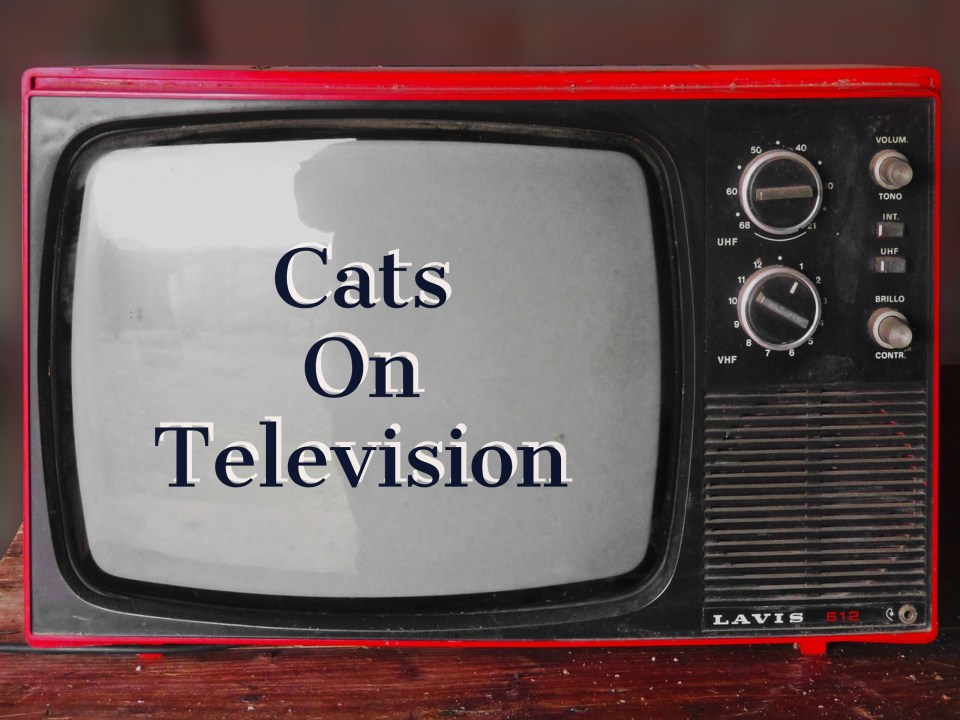 cats on television