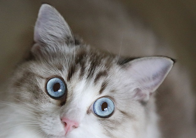 October 29 Is National Cat Day Cat Opedia