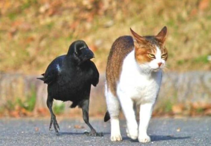 「猫 カラス」の画像検索結果