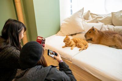 「カピバラカフェ 猫」の画像検索結果