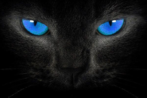 Кошачье зрение как видят кошки Кошкомир