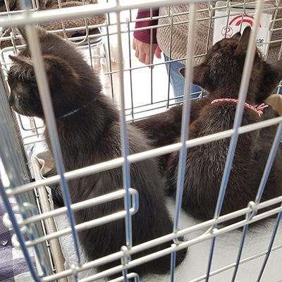 里親募集中の黒仔猫たち1224001