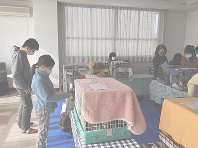 0121新春猫譲渡会の様子