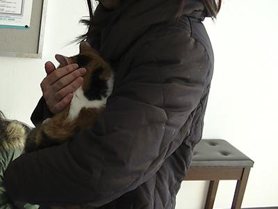 保護猫まーちゃん0049jpg