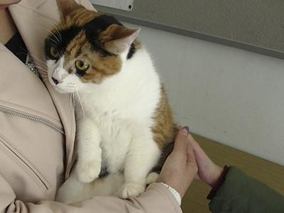 保護猫まーちゃん0048jpg
