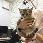 保護猫シトロン02
