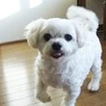 保護犬ぽーちゃん