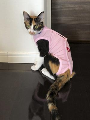 エポちゃんの術後服