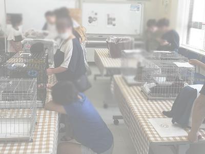 20190623譲渡会の様子03