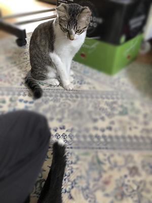 保護猫「むてき君」