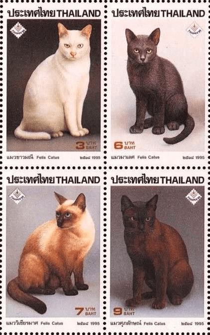 タイ猫原種の切手
