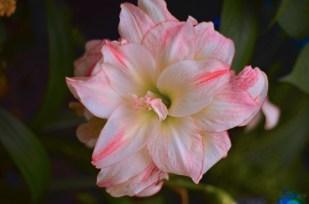 flowers5_s
