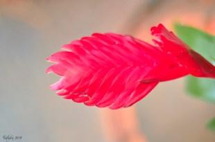 flowers6_s